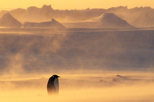 penguins_16