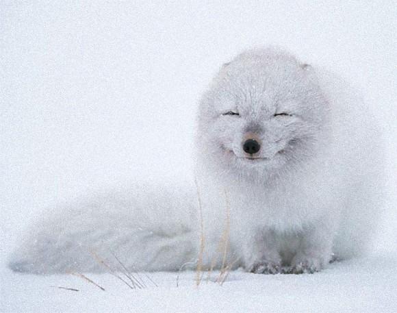 cute-smiling-animals-7_e_e