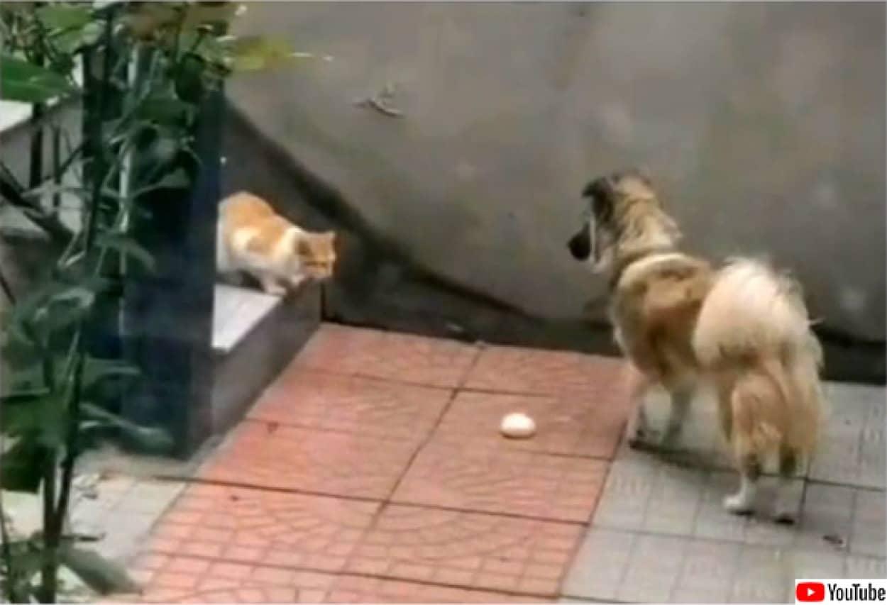 野良猫に自らの餌を分け与える犬