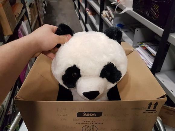 パンダのぬいぐるみに一目ぼれ。でもすぐには買ってもらえない。誰かに買われちゃったらどうしよう...そこで少年はこんな作戦をとったところ、ミラクルな結末が待っていた(イギリス)