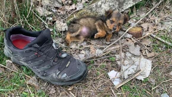 ゴミの中に靴に寄り添っていた子犬、やさしい男性に救われ、新たな家族の元へ