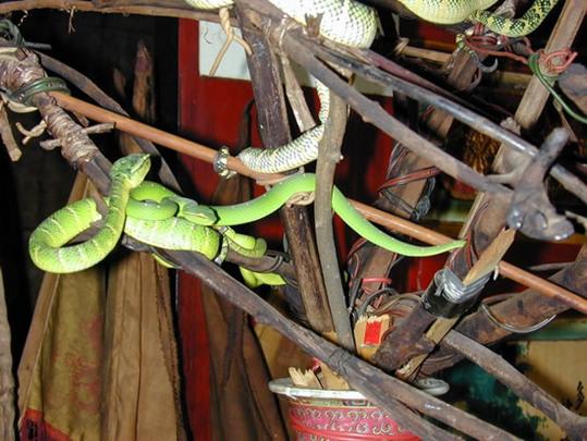 Snake-Temple-Penang3
