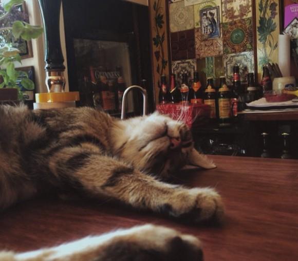 おいしいお酒と猫、これ以上何を望めと?15匹の猫がゆる~く出迎えてくれる英国のパブ「Bag O'Nails」