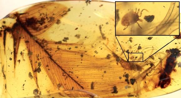 恐竜の血を吸っていたダニが琥珀の中から発見される。ジュラシックパークみたいに恐竜を復元できるのか?(米研究)