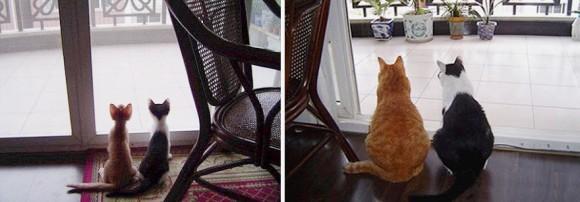こんなに大きくなったのニャン!対象物で猫の成長っぷりがわかるビフォア・アフター写真集