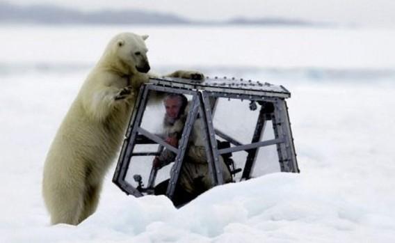 polar_bears_01_e