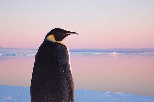 penguins_01