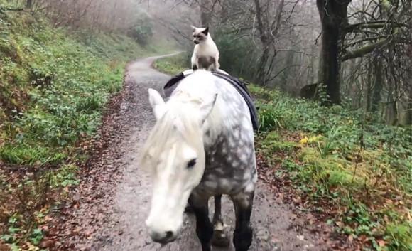 大親友の馬に乗り、仲良く2匹で毎日散歩。猫と馬の友情物語(イギリス)