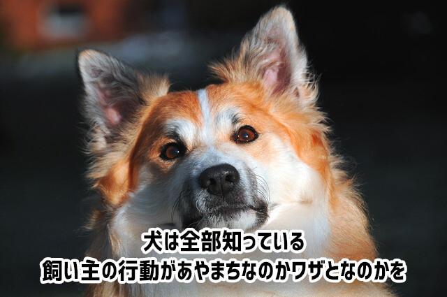 犬は飼い主の行動が過ちなのか、ワザとだったのかを見抜くことができる