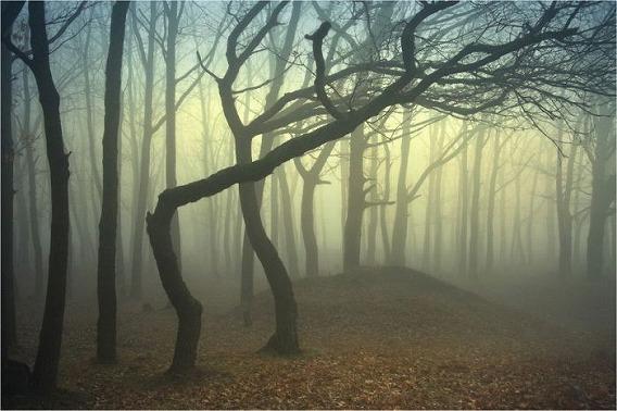 fog_20