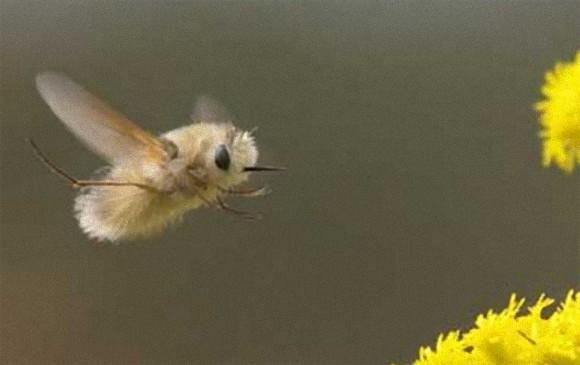 昆虫にも意識がある。自分たちの生きる世界を感じ取っている(米研究)