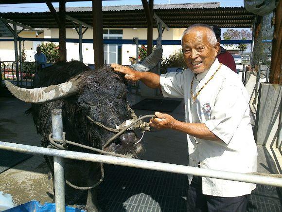 cow-1 (1)