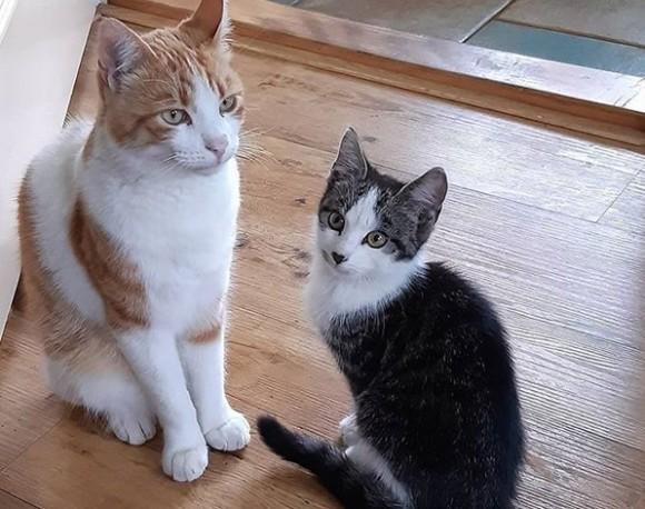 飼い猫と仲良くなった野良の子猫、家に招待され家族の一員に(オランダ)