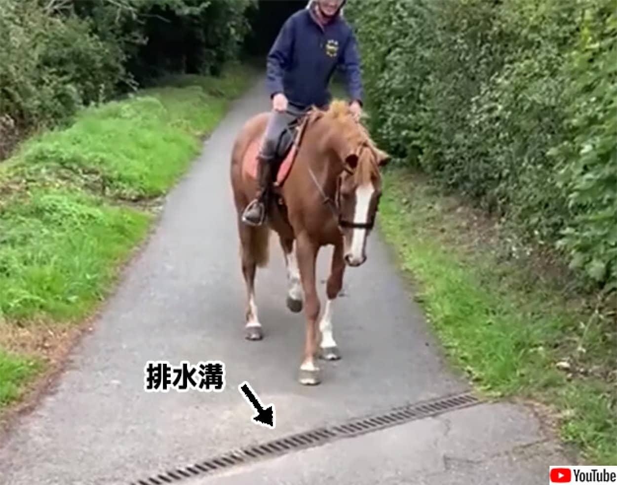 排水溝が怖い馬、避けて歩く