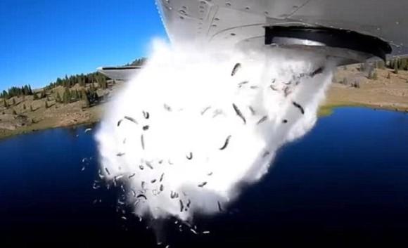 魚の雨が降りまくり!大量の魚を飛行機から湖へ空中散布。ダイナミックな放流映像(アメリカ)