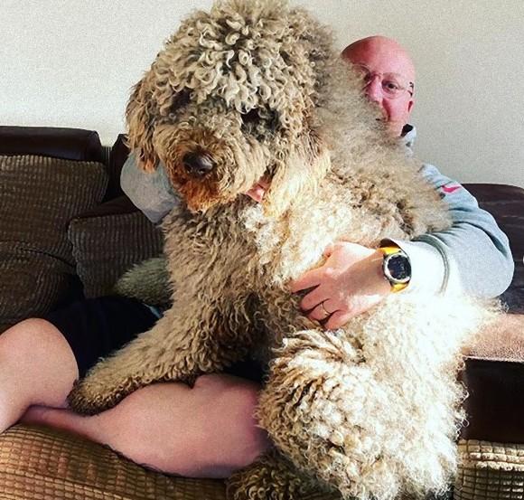 大きくなっても甘えん坊。自分はまだ子犬だと思っている大型犬だが、飼い主の心の支えとなっている(イギリス)