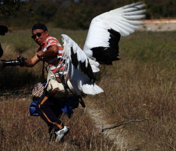 ツルのこうげき。カメラを向けた観光客を執拗に襲う激おこタンチョウヅル(中国)