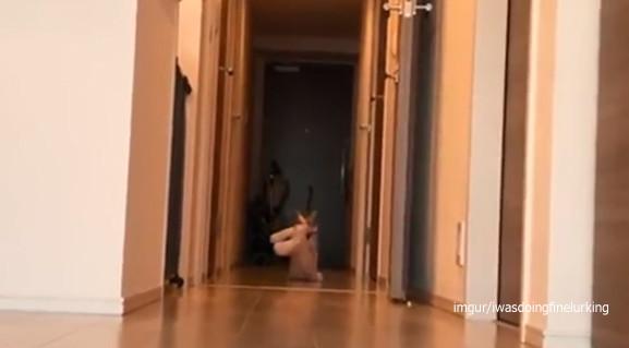 どんなクリーチャーが迫ってくるかと思えば...猫がぬいぐるみをくわえて運ぶ様子があまりにもシュール