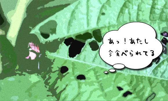 「あっ!今食べられてる。あいつか・・・」 一部の植物は体を食べられていることを感じ取り、誰に食べられたかを認識できる(米研究)※昆虫出演あり