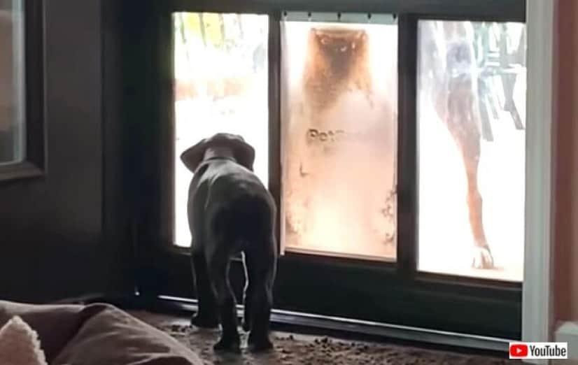 doggydoor1_640