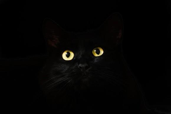 鳴き声だけ聞こえてくるが姿は見えず。全米で大騒動を引き起こしたミステリー「囚われの猫」。その結末は?(アメリカ)
