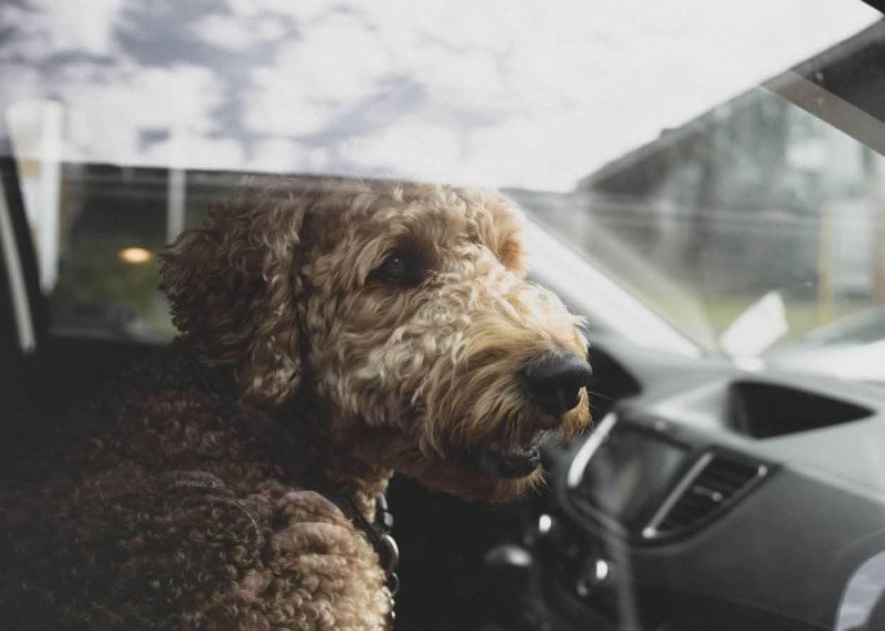 熱波が続くイギリスで、スーパーの駐車場の車に犬が置き去りになっていないか定期的にパトロールが開始される