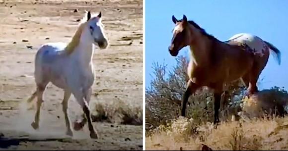 ガールフレンドと離れ離れになり、失意のどん底にあったオス馬が3年ぶりに再会、輝きを取り戻す(アメリカ)