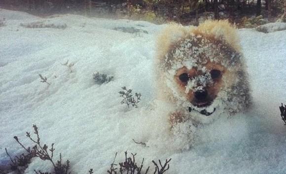 こう寒くっちゃよう。寒さ対策に見る動物と雪のぽかぽか面白画像