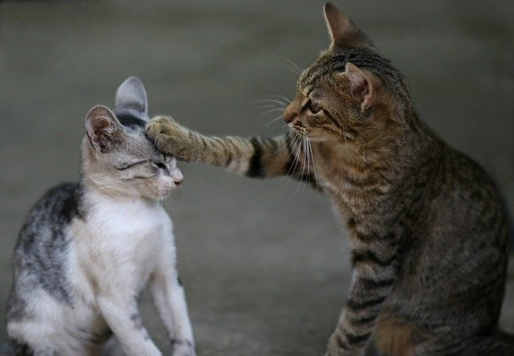 cat-3737295_640_e