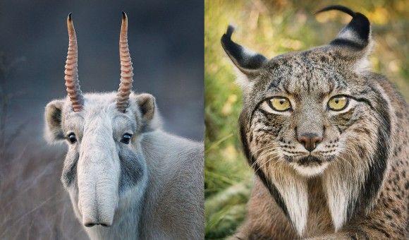 今まだ彼らは生きている。絶滅の危機に瀕した動物たちの写真を撮り続ける写真家
