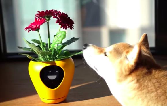 植物版バウリンガルみたいなものなのか?植物の気分をアニメーションで伝えるスマート植木鉢が販売決定