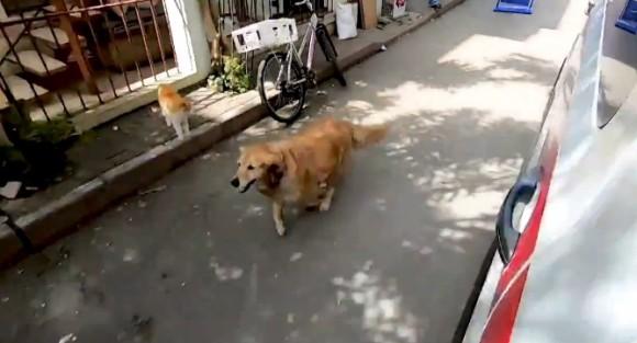 飼い主が乗る救急車を追いかけ、全力で病院まで走り続けた犬(トルコ)