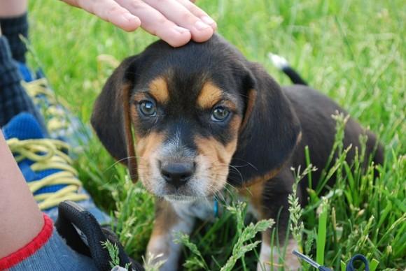 犬の感情的な認識と理解は人間の幼児と同等であることが判明(インド研究)