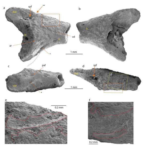 カエルの化石が南極で発見