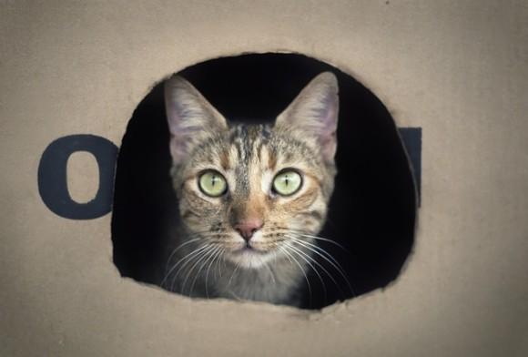 cat-1912330_640_e