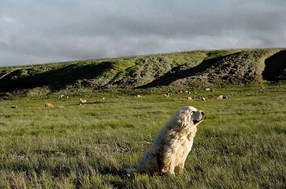 old_dogs_06