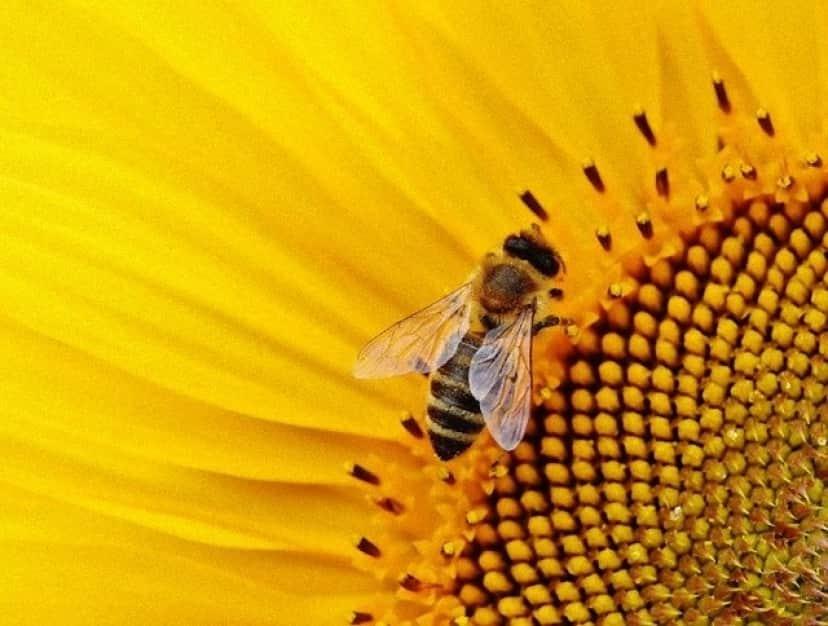 sunflower-1643794_640_e