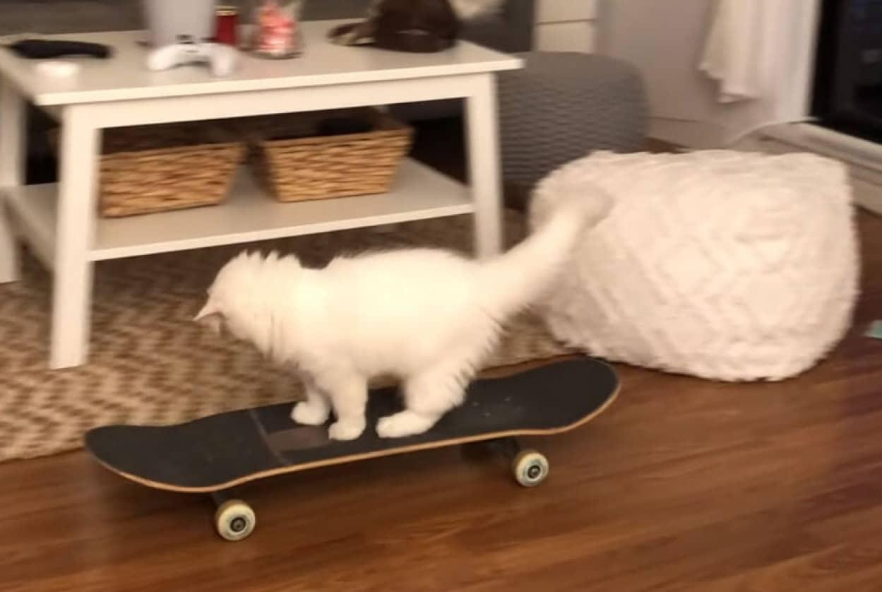 スケボー猫現る!