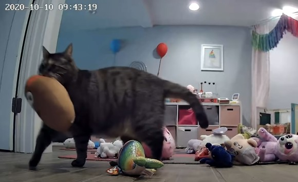 猫の貢ぎ物がすぎる