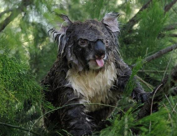 koala2_03_e