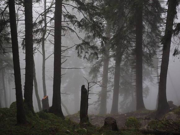 決して夜に行ってはいけない。イギリスにある10の呪われた森(心霊スポット)