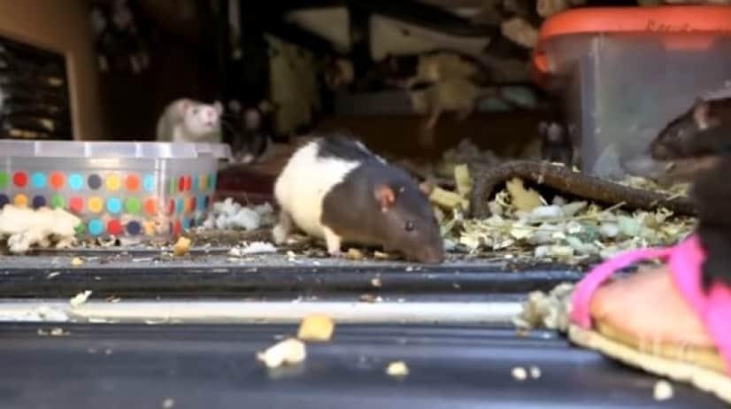 rat2_e