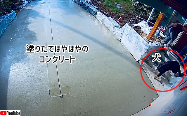 塗りたてのコンクリートに犬が足跡