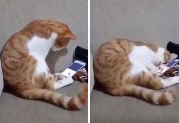 亡き飼い主の動画を見た猫の姿があまりにもせつなすぎて...※追記あり