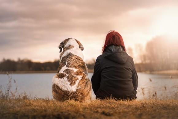 たった10分動物と触れ合うだけで、ストレスが大幅に軽減される(アメリカ研究)