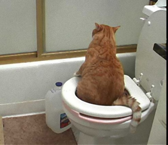Using Baby Bathtub As Cat Litter