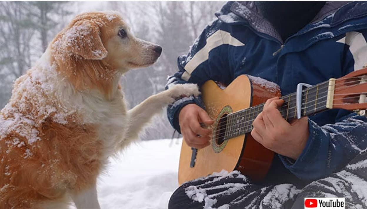 雪上で飼い主が弾くギターの音色をじっと聞いている犬たちのやさしい世界