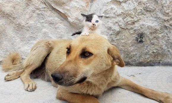 我が子をすべて死産しぬいぐるみだけが心の支えだった犬。孤児の子猫と運命の出会い(シリア)