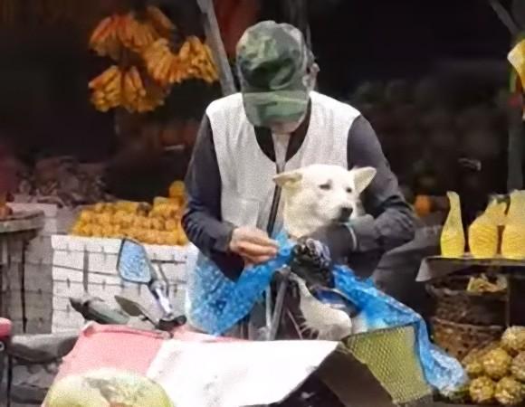雨に濡れたら冷たかろう。誰よりも犬を愛するおじいさん。カッパを着せて帽子をかぶせて自転車でGO(フィリピン)