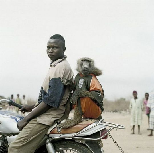 african_wild_pets_05